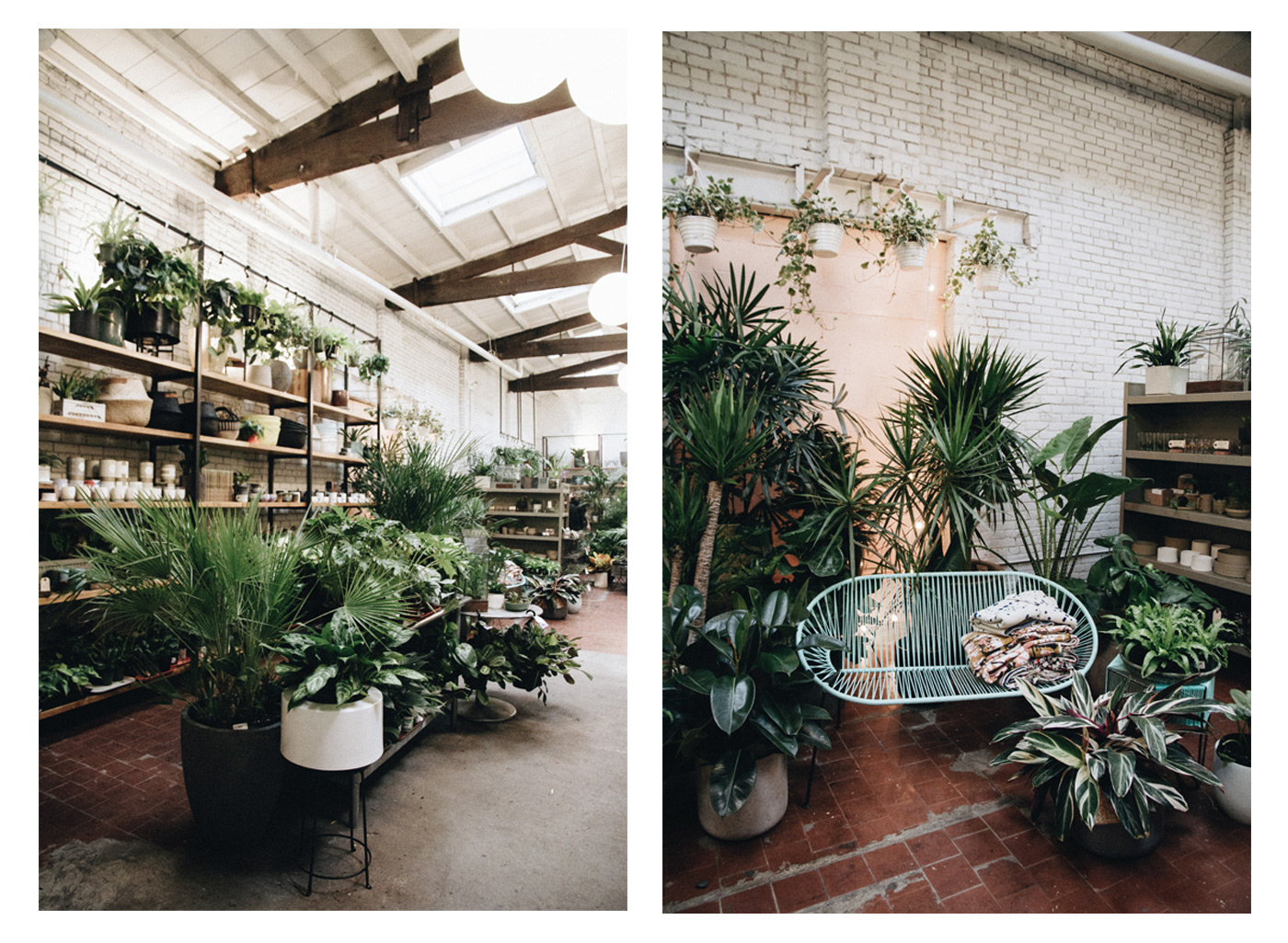 sprout home a small boutique in brooklyn new york city where you can buy alot of plants
